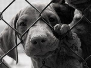 Bagges hemlösa hundar