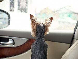 Varma bilar blir hundars död