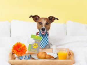 Resa utomlands med hund