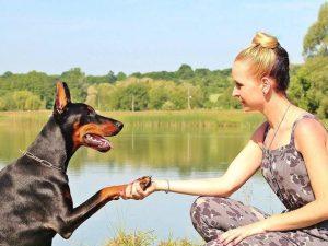 Vårda hundens tassar